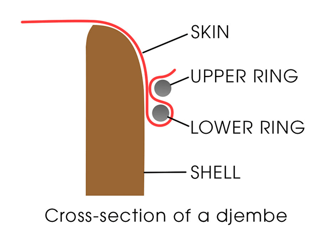 Cross section of a djembe