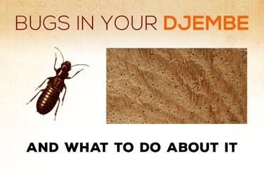 Bugs in djembe